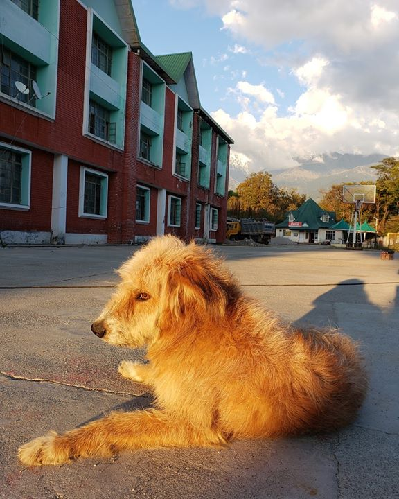 Furry friend on the set 🐶 #ILoveDogs 🐾 . #HimachalPradesh #shooting #location #dog #hindi #film #bollywood #petdog #doggie #furry #paws #lovedogs #himachal #india #ojasrawal #actor #doglover #doglovers #dogs #dogsofinstagram #instadog #ilovepets #pets #ojas #sunsetphotography #dogoftheday #dogstagram #dogsofig #dogsoftheworld @dogsofthewrld @dogsofinstagram @indogspot @dogsthathike @dogspupsworld @dogsphere  @dogs_lovers_india @doglove @puppyglobe @worlddogs